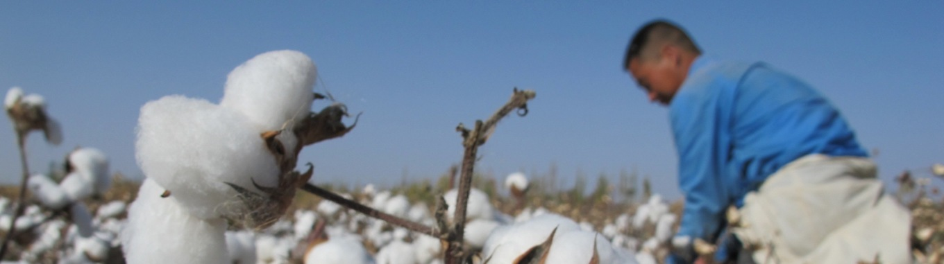 About Better Cotton Initiative; The Better Cotton Initiative exists to make global cotton production better for the people who produce it, better for the environment it grows in and better .