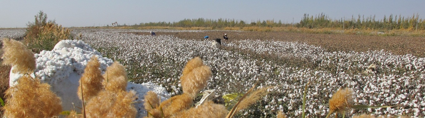 Company Description: The Better Cotton Initiative (BCI) is an international not-for-profit organisation active in the cotton sector. Its purpose is to make global cotton production better .