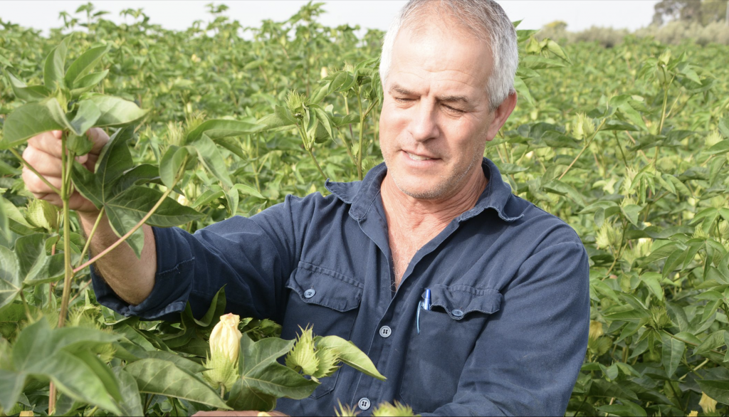 A farmer out in the field inspecting his crop