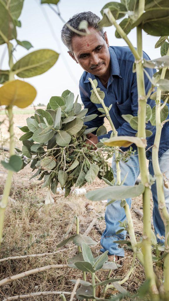 Soil-Health-cotton-farming_Better-Cotton