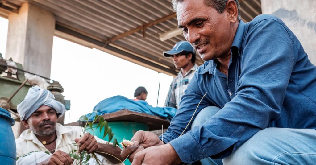 Vinodbhai Patel, prepares a biopesticide using leaves from local Neem trees